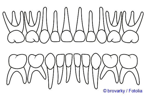 tooth structure - the picture